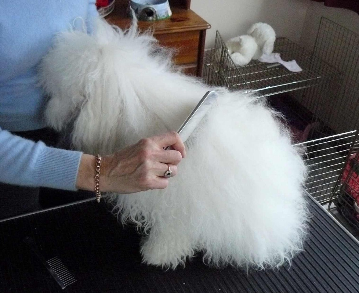how to get dog hair off clothes without lint roller
