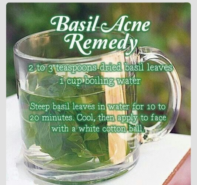 If you like to use plants and herbs for healing purposes, you won't find many plants that will give you the numerous benefits that you get from the basil plant. Let's take a look at some of the benefits of basil, particularly for your skin and health.