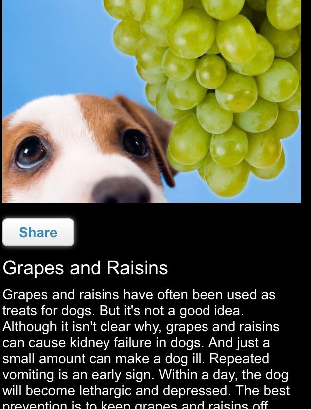 Foods Your Dog Should Never Eat Trusper